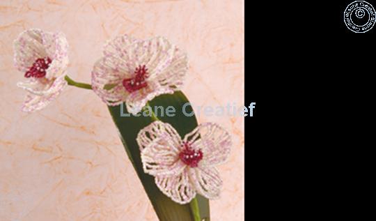 """Afbeelding van LeCreaDesign® Bladgroen pakket """"phalaenopsis"""""""