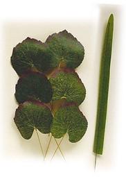 Image de la catégorie Feuilles de soie